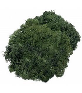Musgo Verde Oscuro 50 gr Knorr Prandell 216694446