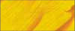 13 Amarillo Anaranjado