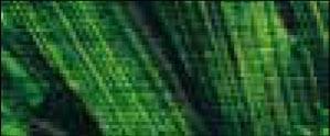 16 Verde vejiga