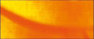 931 Amarillo Dorado fluorescente